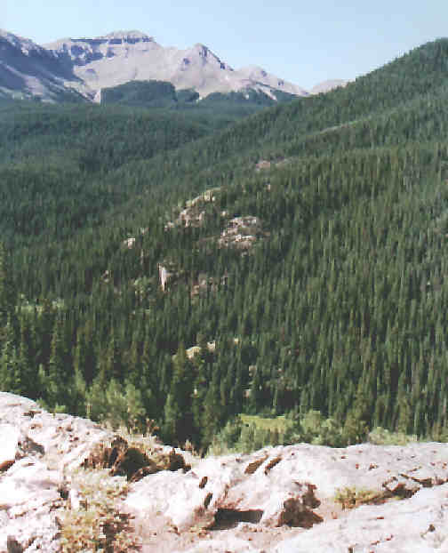 Creede Valley of Trees